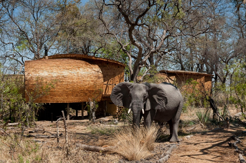 Botswana lodges safari sostenibles